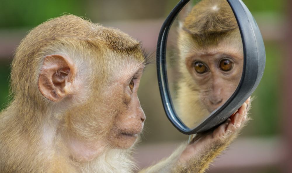 Monkey in the mirror -andre-mouton-744484-unsplash