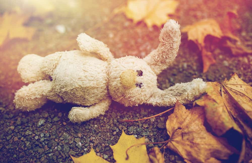 toy-rabbit-and-autumn-leaves-on-road-or-ground-PJYTAU6